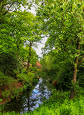 Картинка Англия Парк Речка Деревья Траве Ramster Gardens Surrey Природа