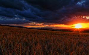 Фотография Поля Рассветы и закаты Пейзаж Небо Колос Облака Природа