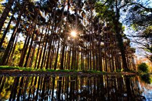 Фотография Лес Осенние Дерево Солнце Лучи света
