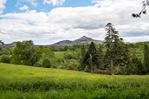 Картинка Леса Пейзаж Ирландия Трава Дерево County Wicklow, province of Leinster Природа