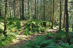 Фотографии Леса Лето Деревья Траве Тропинка Мох Природа