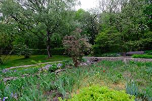 Фотография Германия Парки Кустов Дерево Botanischer Garten Solingen