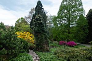 Фото Германия Парк Дерева Кусты Ели Botanischer Garten Solingen Природа