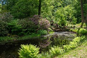 Картинка Германия Парки Пруд Кустов Деревья Wiesenburg Castle Park Природа