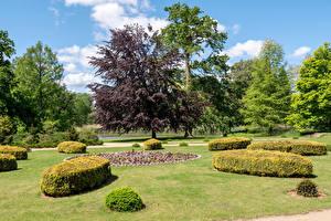 Картинки Германия Парк Дизайна Кусты Дерева Wiesenburg Castle Park Природа