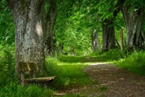Обои для рабочего стола Траве Тропа Скамья Дерево Природа