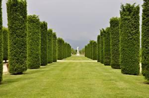 Фото Италия Сады Газоне Аллея Деревья Palace of Venaria Venaria Reale город