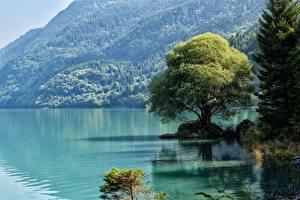Обои Италия Озеро Горы Деревьев Trentino, dolomite Alps Природа
