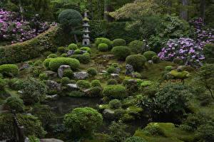 Картинка Япония Киото Парки Рододендрон Кустов Sanzenin Temple Природа