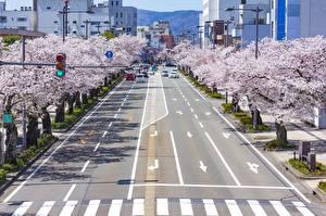 Фотографии Япония Токио Дороги Цветущие деревья Улица Сакуры Города