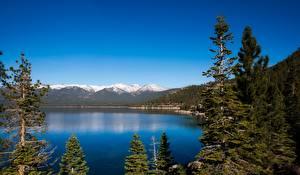 Фотография Горы Озеро Леса Пейзаж США Калифорнии Lake Tahoe Природа