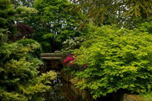 Картинка Голландия Парк Водный канал Дерева Кусты Keukenhof Gardens Природа