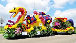 Фотография Нидерланды Черепахи Змеи Роза Антуриум Дизайна Lisse Природа