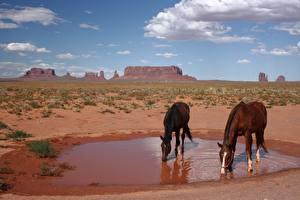 Картинка Парки Лошади США Две Пьет воду monument Valley Park, Utah Животные