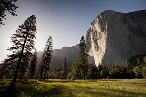Картинка Парк Штаты Гора Йосемити Скале Трава Дерево mount El Capitan Природа