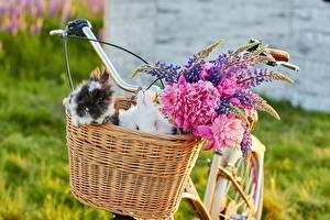 Фото Кролики Люпин Корзинка Велосипед Цветы