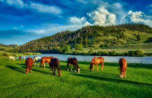 Картинки Реки Лошадь Штаты Луга HDRI Холм Трава Wyoming животное