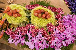 Фото Роза Орхидеи Каладиум Цветы