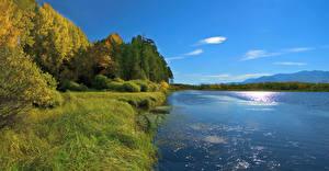 Фотография Россия Сибирь Реки Побережье Осень Трава Дерево Природа