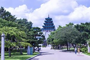 Фото Южная Корея Парки Деревьев Музеи National Museum of Korea, Seoul