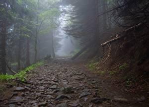 Картинка Камни Леса Тропа Деревьев Тумане