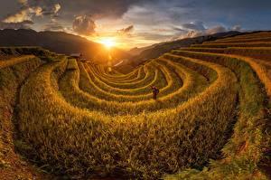 Картинка Рассветы и закаты Поля Вьетнам Солнце Природа