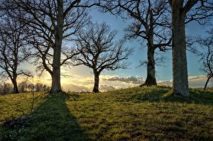 Картинка Рассвет и закат Деревья Траве HDR На ветке Природа