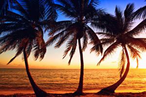 Картинки Тропический Рассветы и закаты Море Берег Пальма Втроем Природа