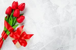 Фотография Тюльпаны Красный Бантик Шаблон поздравительной открытки цветок