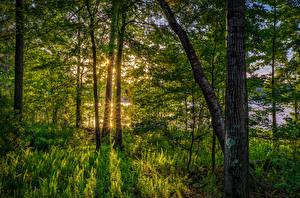 Фотографии Штаты Лес Флорида Деревья Трава Лучи света Природа