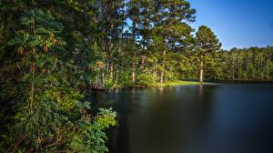 Фото США Озеро Лес Побережье Деревьев West Point Lake Georgia Природа