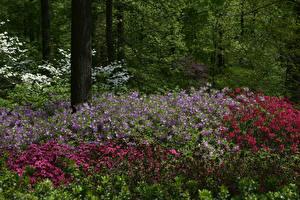 Фотография США Парк Альстрёмерия Нью-Йорк Кустов Botanical Garden Природа