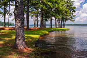Картинка Америка Парки Озеро Флорида Деревья Anderson Park West Point Lake