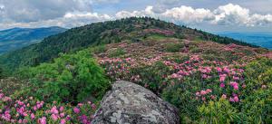 Обои США Парк Рододендрон Камни Холмов Кустов Roan Mountain Rhododendron Gardens Природа