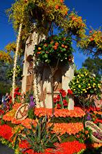 Фотографии Штаты Парк Розы Калифорнии Дизайна Rose Parade Pasadena цветок