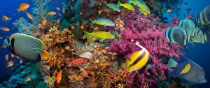 Обои Подводный мир Кораллы Рыбы Животные картинки