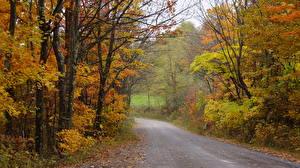 Фотографии Осенние Лес Дороги Америка Дерева Nelson County, Virginia