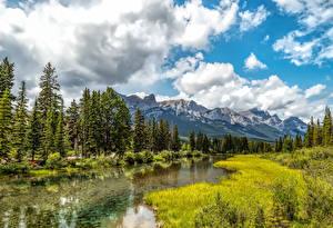 Фотографии Канада Горы Реки Дерево Траве Canmore Alberta Природа