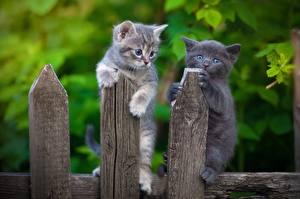 Фотография Коты Котята Забор Из дерева Двое животное