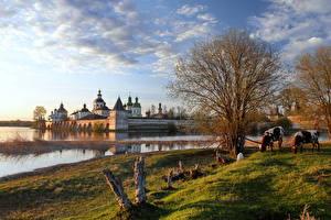 Картинки Корова Озеро Монастырь Россия Траве Деревьев Siverskoe lake, city of Kirillov, Vologda region