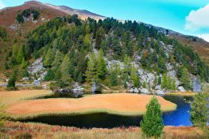 Обои Чехия Горы Лес Озеро Ель Bohemian Switzerland National Park Природа