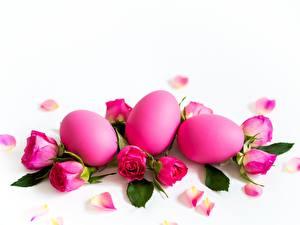 Фотографии Пасха Розы Белом фоне Розовый Яйцо цветок
