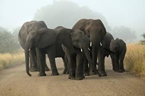 Картинки Слон Детеныши