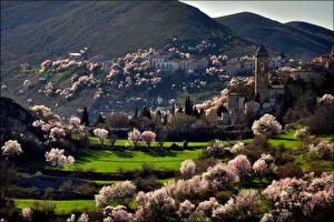 Фото Цветущие деревья Весна Горы Церковь Здания Италия Деревня Santo Stefano di Sessanio, Abruzzo Города
