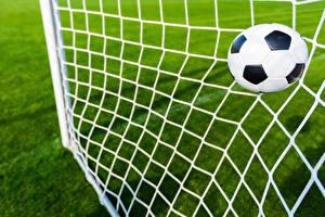 Фотография Футбол Мяч Спортивная сетка Спорт