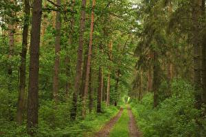 Картинка Леса Дороги Деревья Трава