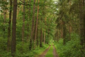 Картинка Леса Дороги Дерева Трава Природа
