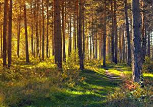 Фотография Леса Дерево Траве Тропы Природа