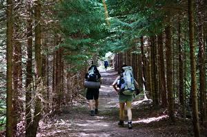 Картинки Леса Штаты Парк Деревьев Тропы Идет Туризм Путешественник Рюкзак West Virginia, Dolly-Sods Природа