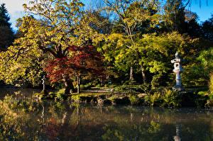 Фото Франция Парки Пруд Осенние Деревья Maulévrier Природа